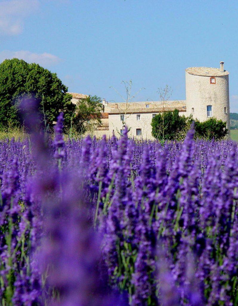 Château de la Gabelle producteurs de lavande bio en provence et produits d'épicerie fine bio de qualité