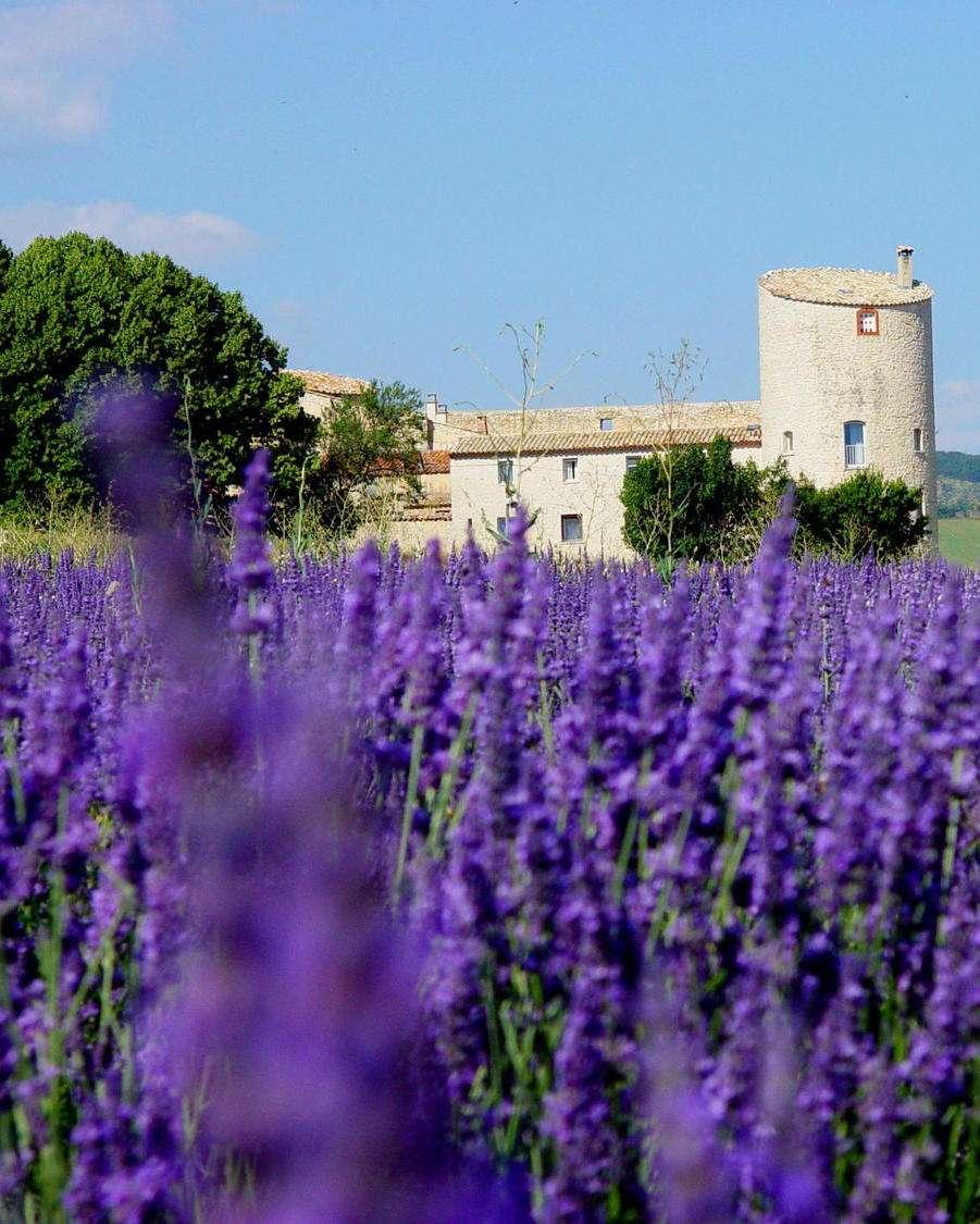 Des Racines et des AIles fait un reportage sur le Château de la Gabelle une bâtisse en Provence au coeur des champs de lavande dans le pays de Sault
