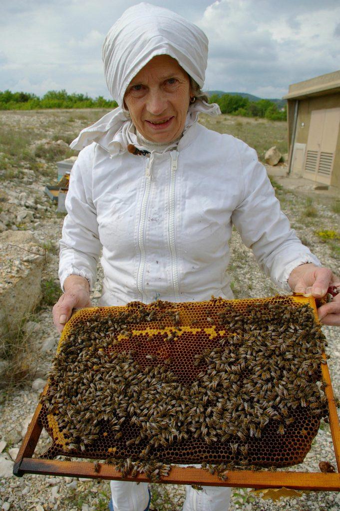miel de lavande de Provence en vente directe chez l'apiculteur sur un domaine bio